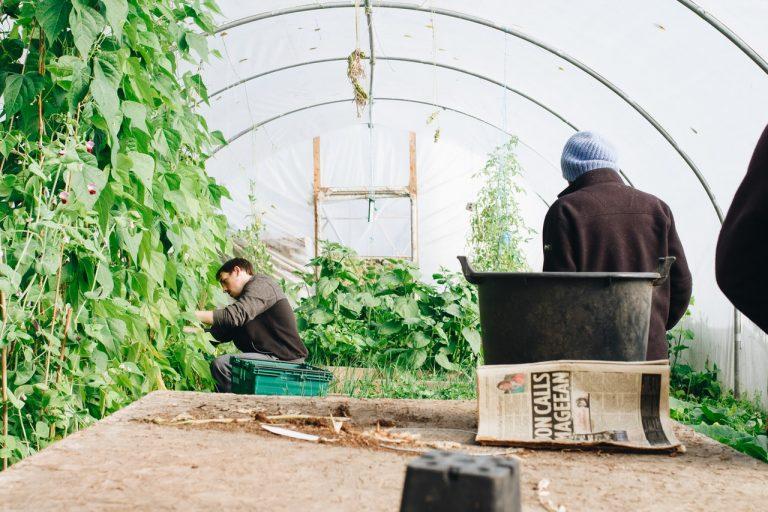 Nożyce do trawy i żywopłotu z napędem – ułatwij sobie pracę